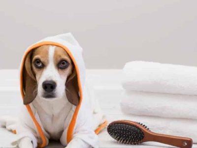 perro-con-cepillo-y-toallas_a2ed5522